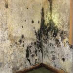 Rorschach Mold - please look at the wall and tell us what you see.