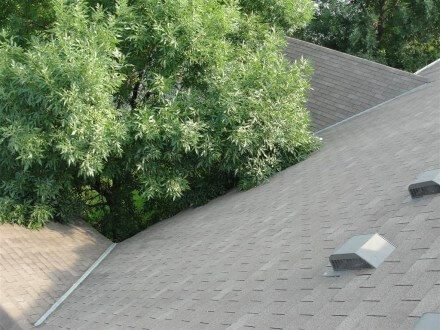Trees rubbing on roof