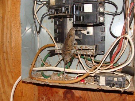 Dead mouse in electrical panel | Construction Pro Tips