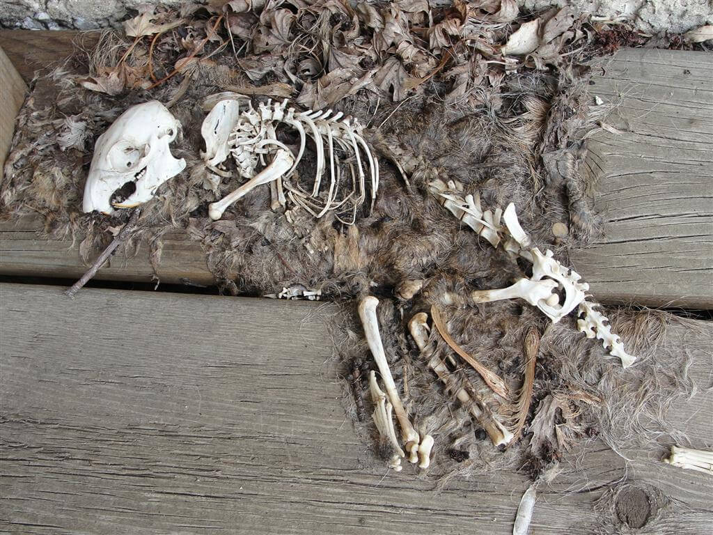 Animals Skeletons And Creepy Stuff Encountered During