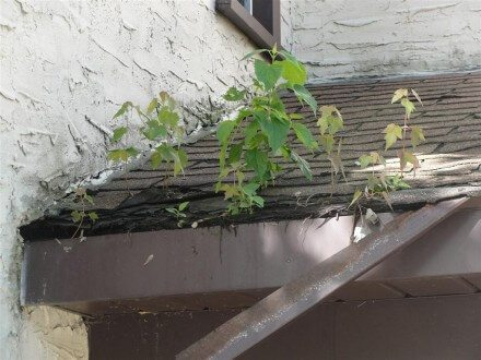 trees growing in roof