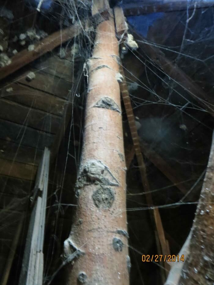 Tree in attic
