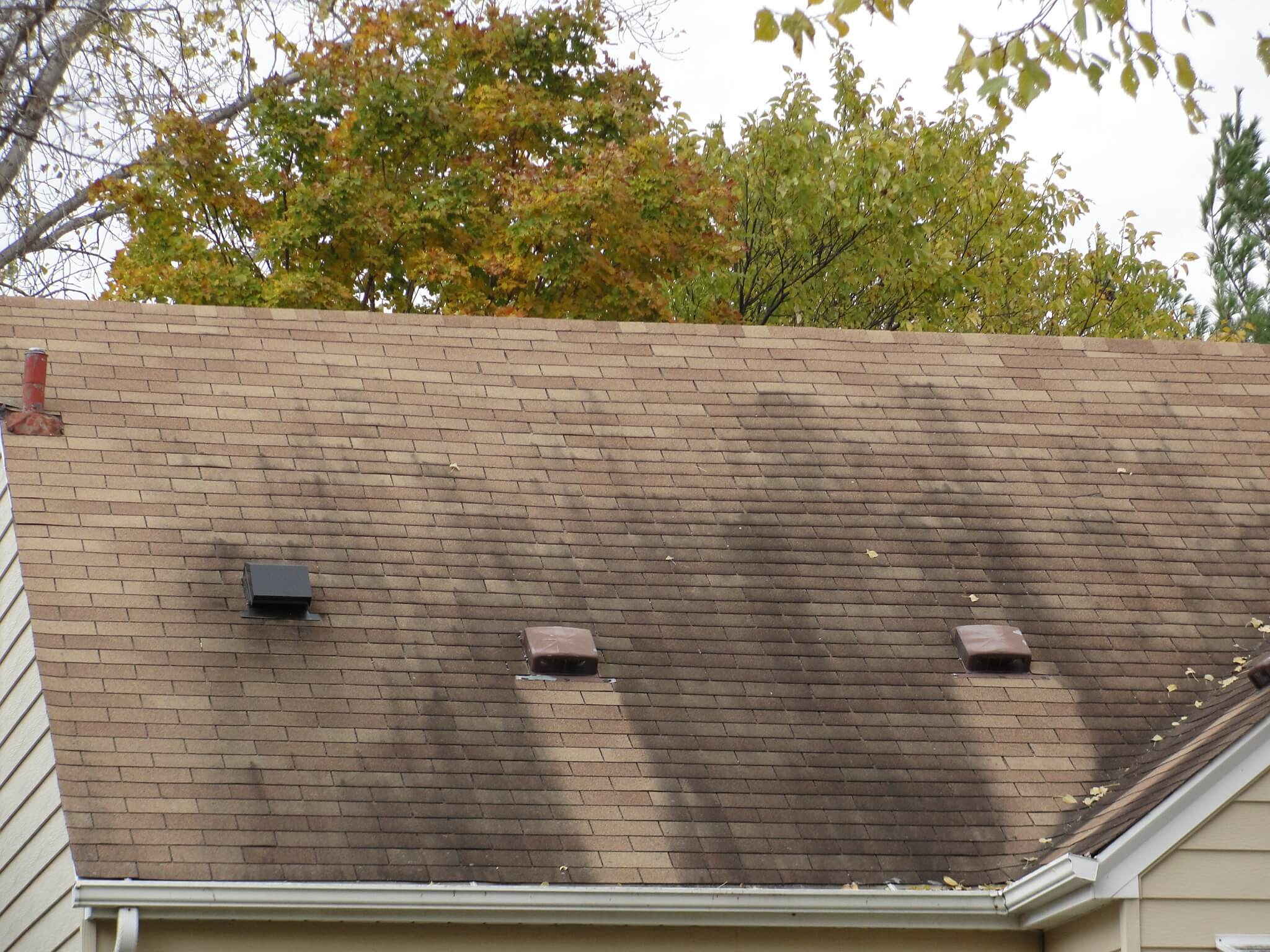 Zinc Strips Prevent Moss Growth On Roofs Algea Top Black The Roof Stays Minty Fresh Zincy Below Vents Because Every Time It Rains A Small Bit Of Gets Washed Off Metal Which Runs Down